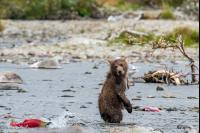 MPM BEAR CUB FISHING 1